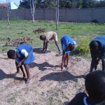 Sowing seeds for food