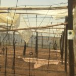A polytunnel was badly damaged during a storm